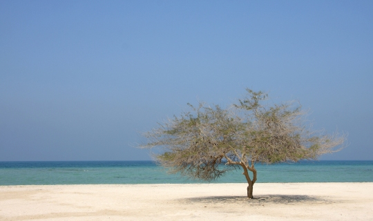 The United Arab Emirates - tree beach.jpg